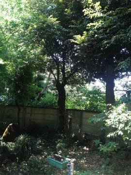 2015-06-01hanegi